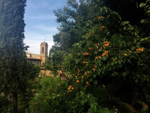 Il nostro giardino con il albero di albicocche (apricots).